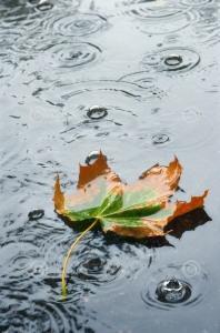 chuva-do-outono-236689